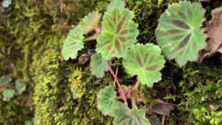 岩に生える植物